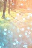 Unscharfes abstraktes Foto der Lichtexplosion unter Bäumen und Funkeln bokeh beleuchtet gefiltertes Bild und gemasert lizenzfreie stockbilder