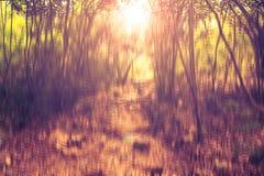 Unscharfes abstraktes Hintergrundfoto des Waldes mit surrealem Bewegungsunschärfeeffekt Stockbild