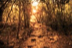 Unscharfes abstraktes Hintergrundfoto des Waldes mit surrealem Bewegungsunschärfeeffekt Lizenzfreies Stockfoto