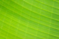 Unscharfes Foto des Musters auf Bananenblatt Stockbild