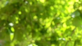 Unscharfes Hintergrundgrün verlässt in der Sonne, Schatten stock video footage