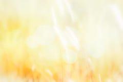 Unscharfes weißes und orange Gras Lizenzfreies Stockfoto