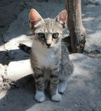 Unschuldige Babykatze Lizenzfreie Stockfotos