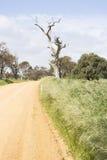 Unsealed Dirt Road, Dead Tree, Fleurieu Peninsula, SA Royalty Free Stock Photos