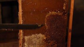 Unsealing Bienenwabe des Imkers stock video