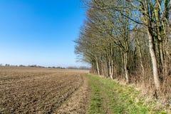 Unseasonally теплая погода как сезоны изменяет от зимы для того чтобы поскакать с новым ростом начиная вытечь на деревьях и ясных стоковая фотография rf