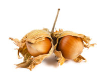 Unseasoned filbert nuts Royalty Free Stock Image