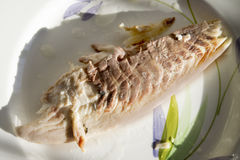 Unseasoned steamed snapper fillet Royalty Free Stock Images