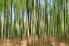 Free Unseen Reality: Blurred View Of Young Beech Trees In Spring Stock Image - 116289691
