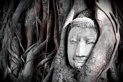 Unseen of thailand Buddha head Stock Photos