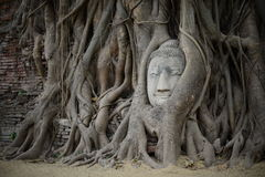 Unseen in thailand. Head of buddha in tree thailand Stock Image