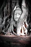 Unseen van het hoofd van Thailand Boedha Stock Afbeeldingen