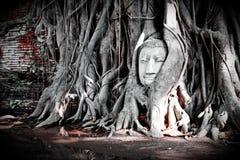 Unseen van het hoofd van Thailand Boedha Stock Fotografie