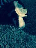unser Schwein Stockfoto