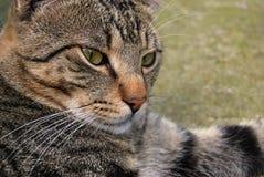 Unsere Haustiere Stockfotografie