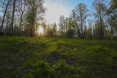 Unset в лесе Стоковые Фото