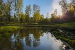 Unset в лесе Стоковое Изображение RF