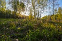Unset in den Wald lizenzfreies stockbild