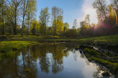 Unset na floresta Imagem de Stock Royalty Free