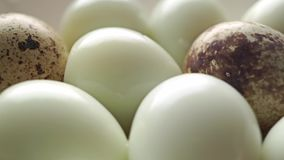 Unshelled hard boiled and shelled quail eggs dolly shot. Clip stock footage