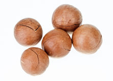 Unshelled macadamia nuts. Isolated on white Royalty Free Stock Photography