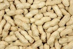 Unshelled peanuts Royalty Free Stock Image