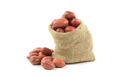 Unshelled Pecan  Nuts. Stock Photography