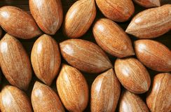Unshelled pecans Royalty Free Stock Images