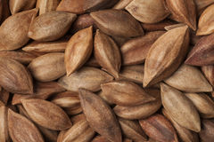 Unshelled pili nuts full frame Stock Photos
