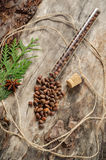 Unshelled pine nuts on aged wood Royalty Free Stock Images