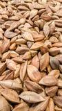 Unshelled pistachenoten in de supermarkt Stock Afbeelding
