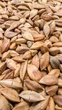 Unshelled pistachio nuts in the supermarket Stock Image