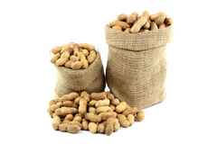 Unshelled Roasted Peanuts  (Nuts with shells). Still life picture of Roasted Unshelled Peanuts (Nuts with shells) in burlap bags and spilled on pile over white Royalty Free Stock Images