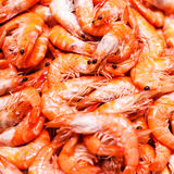 Unshelled tiger shrimps as gourmet seafood macro. Group of Shri Royalty Free Stock Image