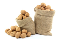 Unshelled Walnuts  Nuts. Still life picture of Unshelled Walnuts Nuts with shells in burlap bags and spilled on pile over white background Stock Images