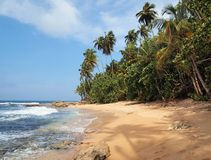 Unspoiled beach with lush vegetation. Unspoiled tropical beach with lush vegetation and a shade of a coconut tree on the sand Royalty Free Stock Images