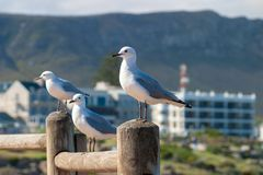 Gull unspoiled nature of South Africa. Gull unspoiled nature parks and nature reserves of South Africa royalty free stock photo