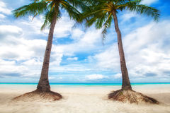 Unspoiled tropical beach in the Maldives. Coconut palms on the white sand by the sea Stock Image