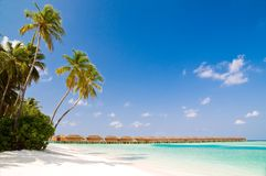 Unspoilt beach on an maldivian Royalty Free Stock Photo