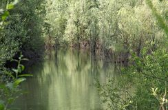 Unspoilt environment with the swamp and marsh plants 3 Royalty Free Stock Image