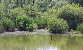 Unspoilt environment with the swamp and marsh plants 5 Stock Images