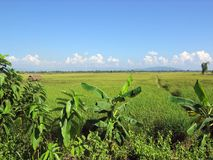 Unspoilt Fields, Northern Thailand Stock Images