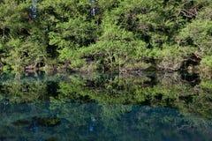 Unspoilt green nature near St Naum Monastery, Macedonia. Lagoon near St Naum Monastery. The water of Sveti Naum originates in nearby Lake Prespa, on the other Royalty Free Stock Photo