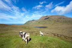 Unspoilt landscape with a sheep and a lamb Stock Image