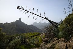 Stunning nature in the highlands Cruz de Tejeda at Gran Canaria, canary island under Spanish flag. royalty free stock photo