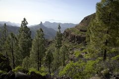 Stunning nature in the forrest of Gran Canaria, canary island under Spanish flag royalty free stock photo