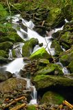 Unspoilt water. Into the forest Royalty Free Stock Photos