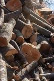 Unstacked trä loggar in en sen höst för solig dag Royaltyfri Fotografi