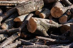 Unstacked wood logs in a sunny day late autumn.  royalty free stock photography
