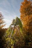 Untätiges Fell mit Herbstbaum Stockfoto